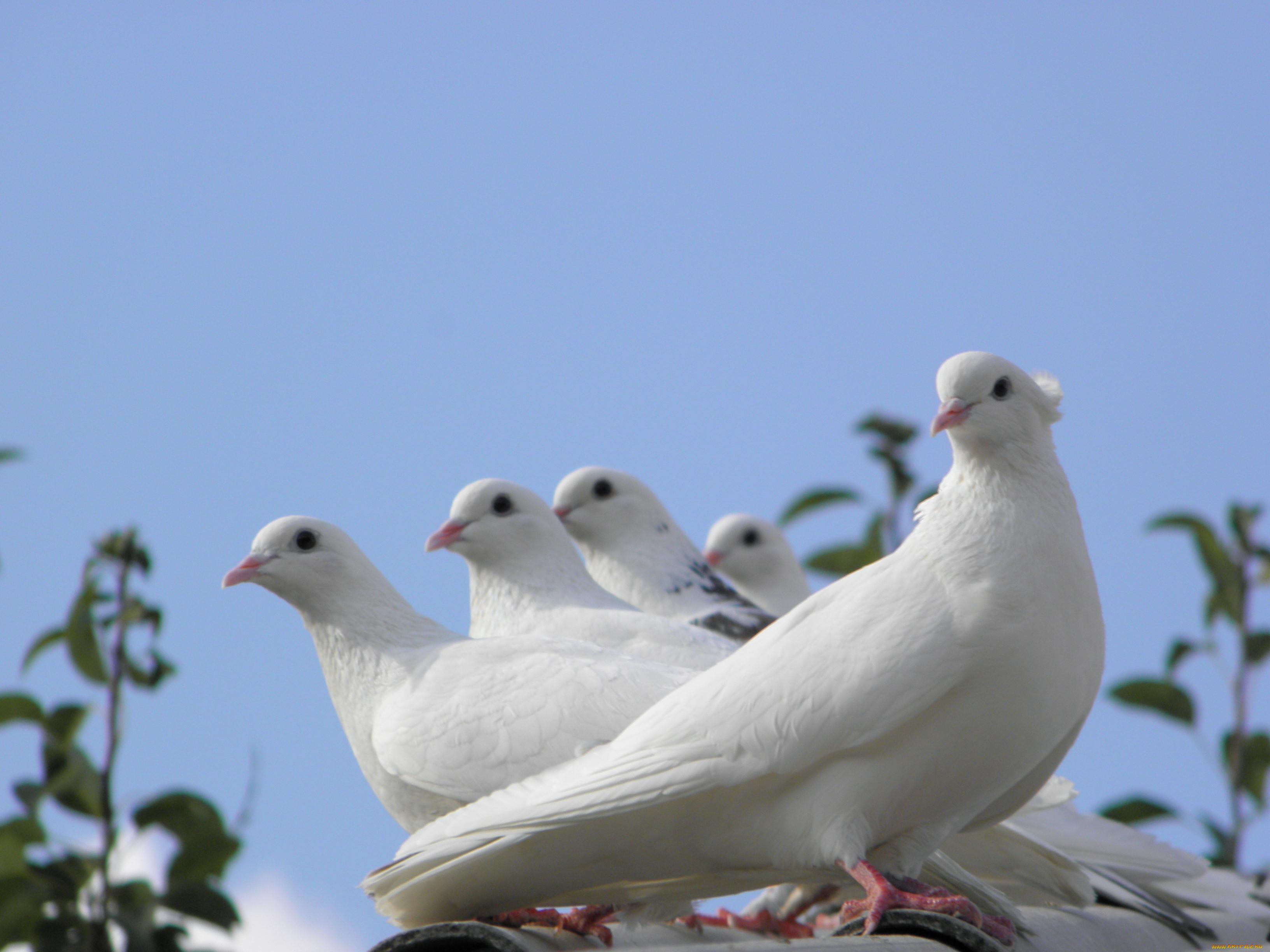 мужчины голубятни мира фото известен своими снимками
